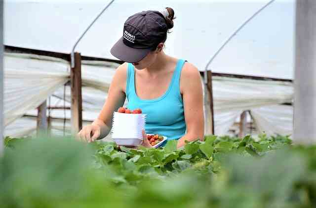 sezonski-rad-poljoprivreda